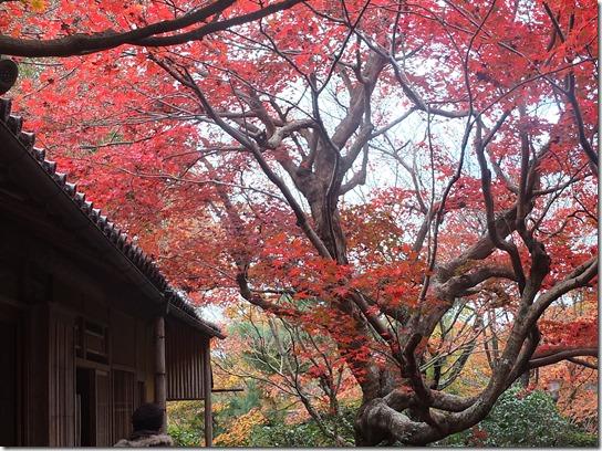 2016京都紅葉 199