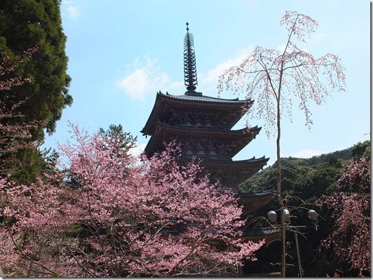 2017京都桜 199
