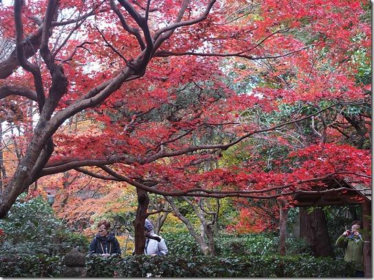 2016京都紅葉 200