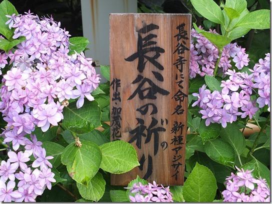 2017鎌倉 紫陽花 037