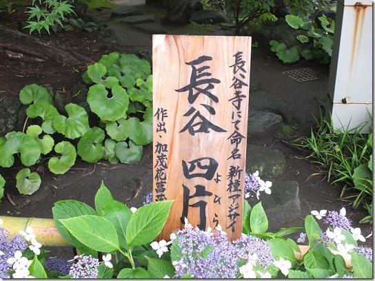 2017鎌倉 紫陽花 039