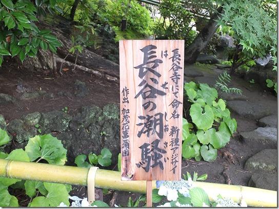 2017鎌倉 紫陽花 041