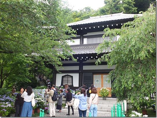 2017鎌倉 紫陽花 049