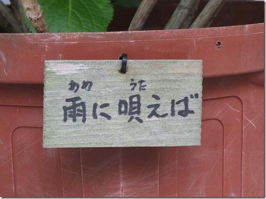 2017鎌倉 紫陽花 053