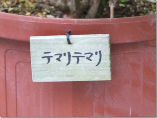 2017鎌倉 紫陽花 055
