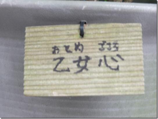 2017鎌倉 紫陽花 063