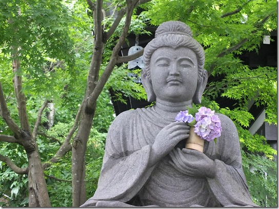 2017鎌倉 紫陽花 106