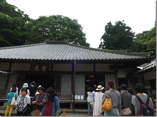 2017鎌倉 紫陽花 171