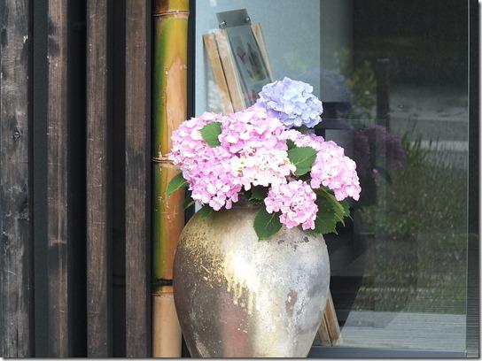 2017鎌倉 紫陽花 244