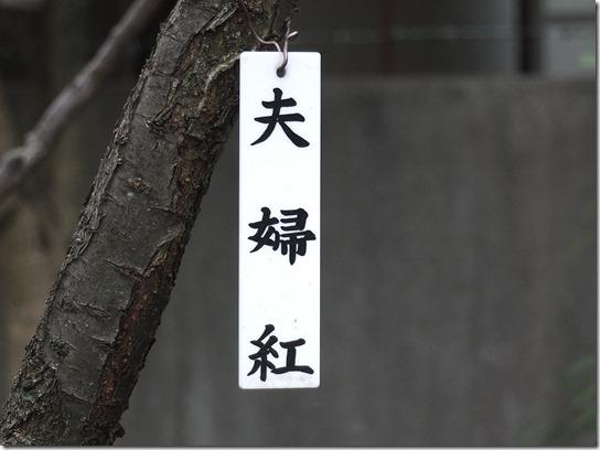 2017東京の梅 244