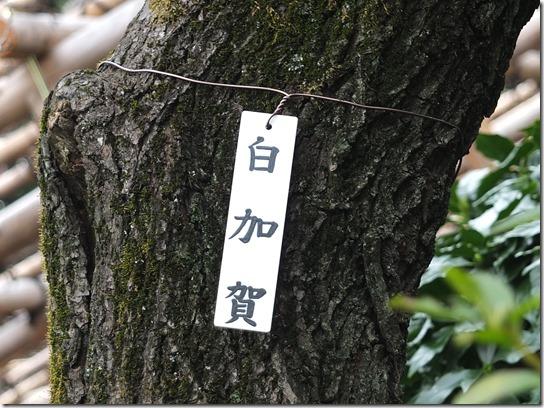 2017東京の梅 246