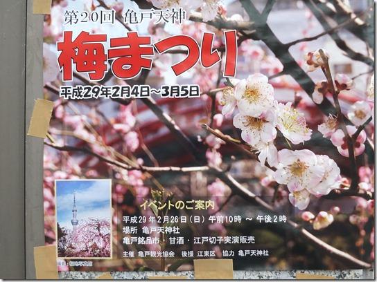 2017東京の梅 309