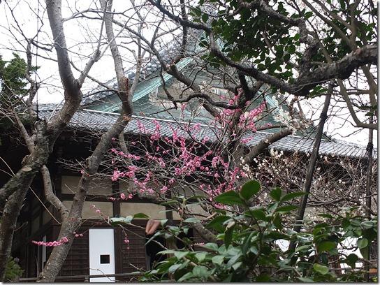 2017東京の梅 580