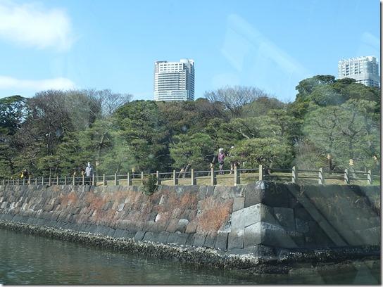 2017東京の梅 647