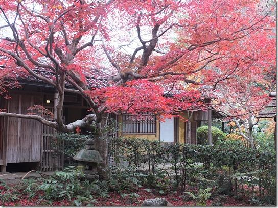 2016京都紅葉 202