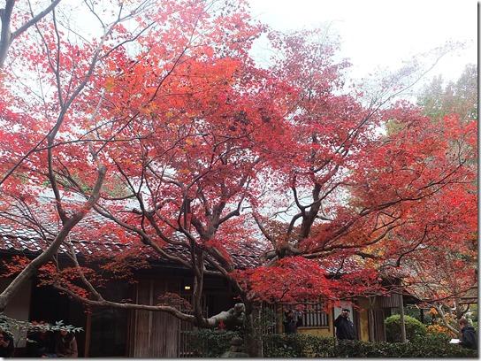 2016京都紅葉 204