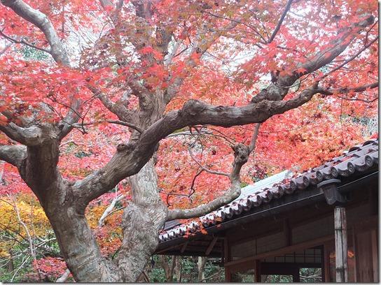 2016京都紅葉 207