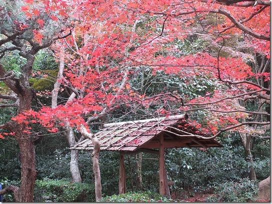 2016京都紅葉 212