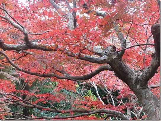 2016京都紅葉 214