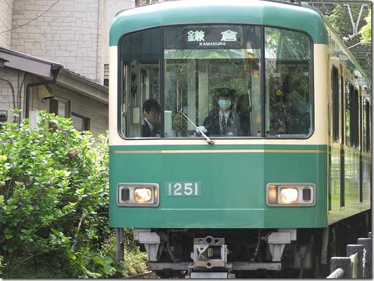 鎌倉 牡丹 桜 224