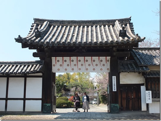 2017京都桜 224