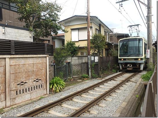鎌倉 牡丹 桜 225