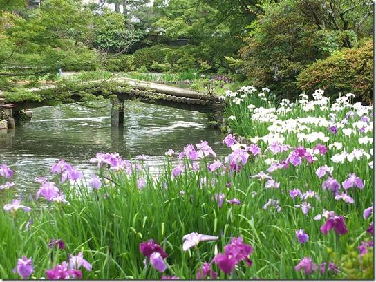 奈良・京都紫陽花2017 244