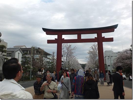 鎌倉 牡丹 桜 250