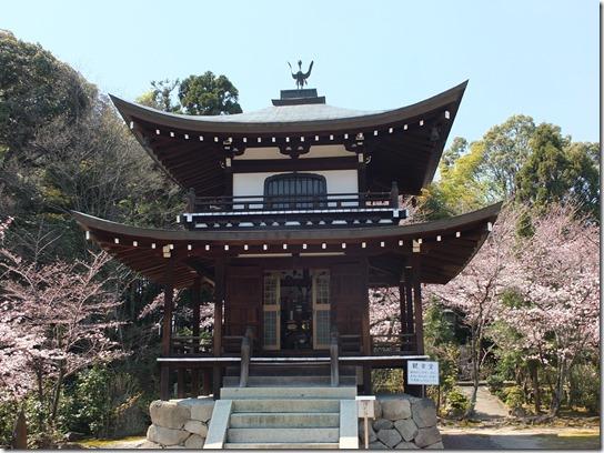 2017京都桜 251