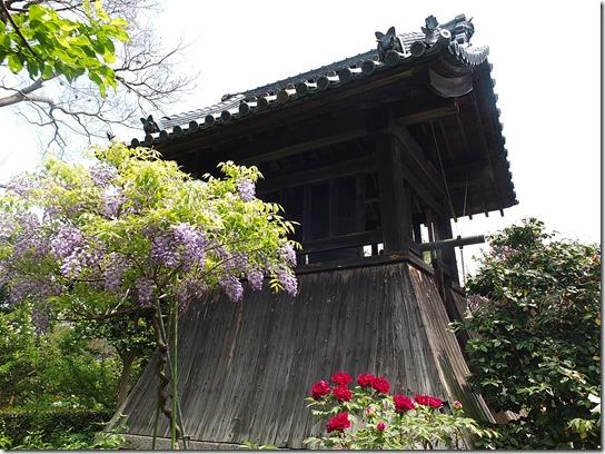 牡丹 関西 2017 253