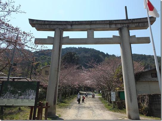 2017京都桜 272