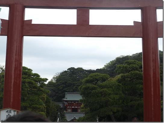 鎌倉 牡丹 桜 272