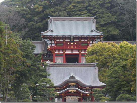鎌倉 牡丹 桜 275