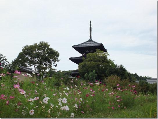 コスモス奈良 276