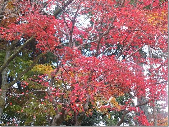 2016京都紅葉 283
