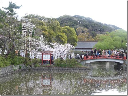鎌倉 牡丹 桜 283