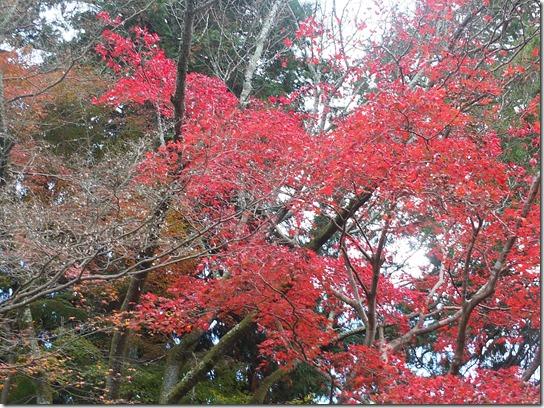 2016京都紅葉 284