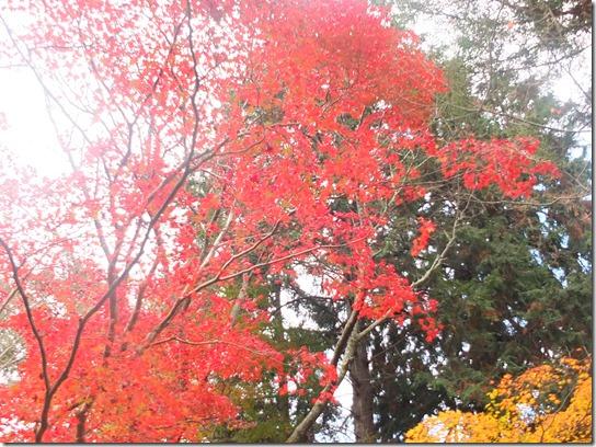 2016京都紅葉 286