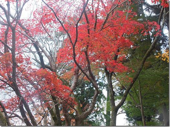 2016京都紅葉 287