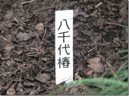 鎌倉 牡丹 桜 293