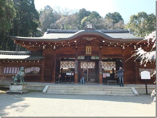 2017京都桜 299