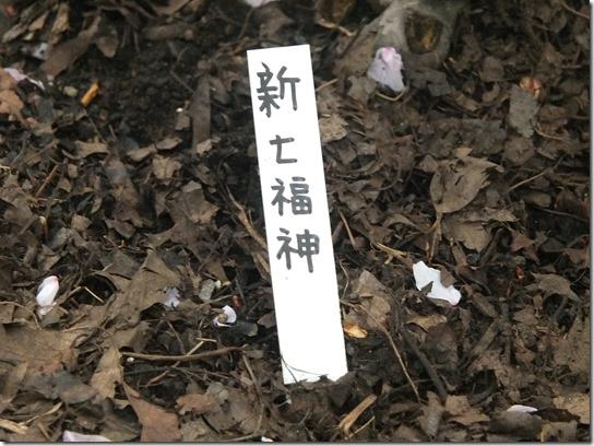 鎌倉 牡丹 桜 304