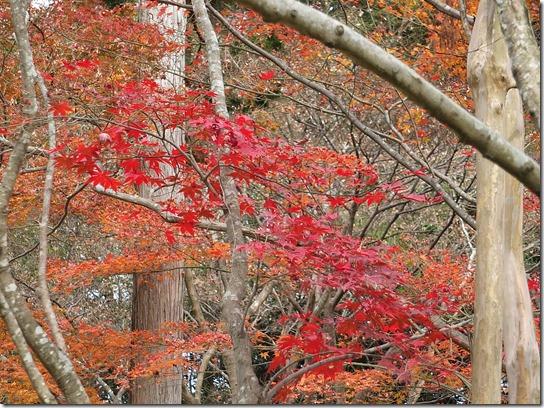 2016京都紅葉 310