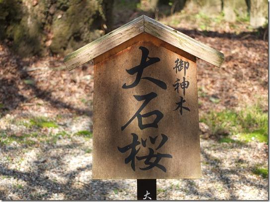 2017京都桜 312