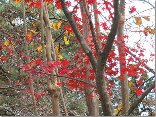 2016京都紅葉 313