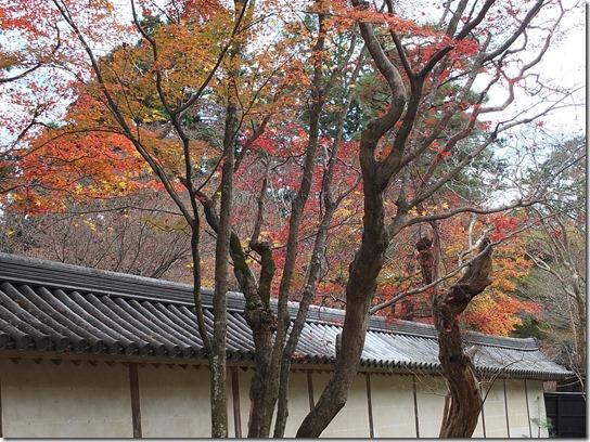 2016京都紅葉 314