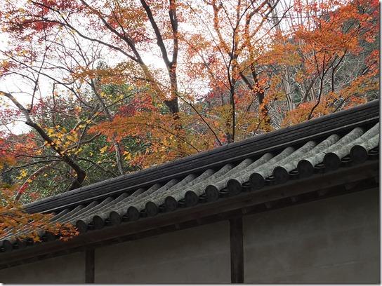 2016京都紅葉 318