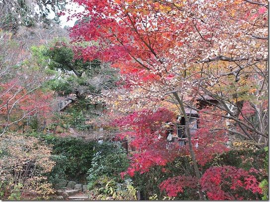 2016京都紅葉 329