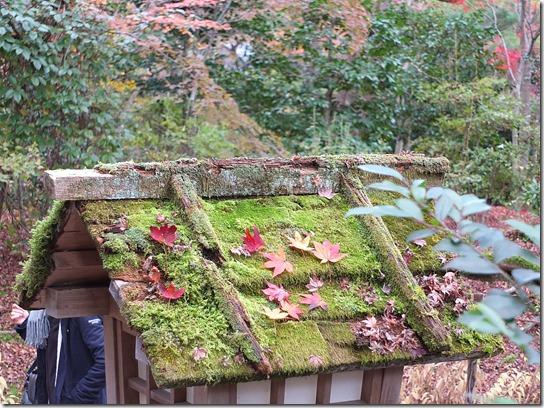 2016京都紅葉 333