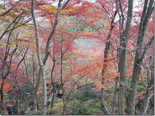 2016京都紅葉 337